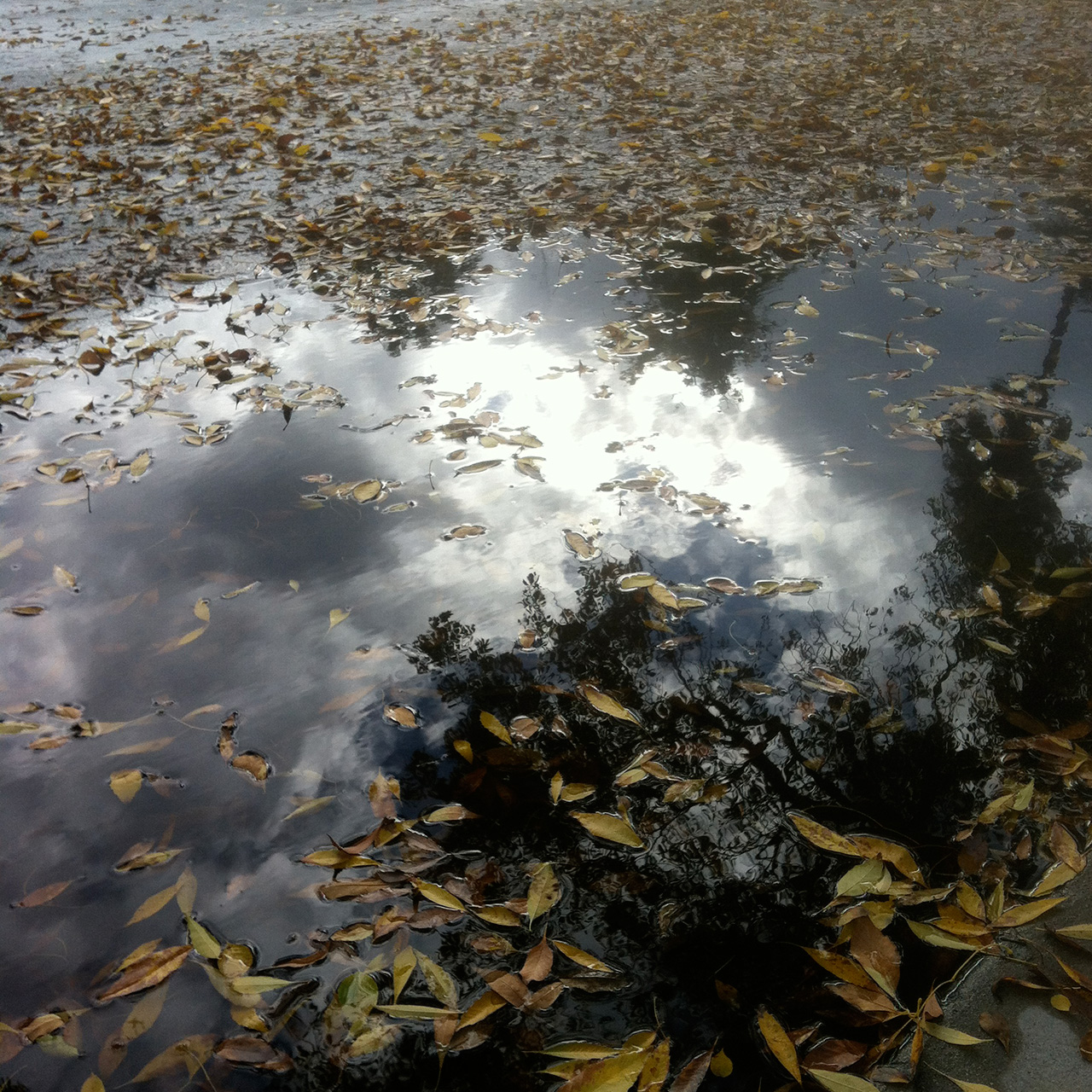 LA_Fall_puddle_leaves.jpg